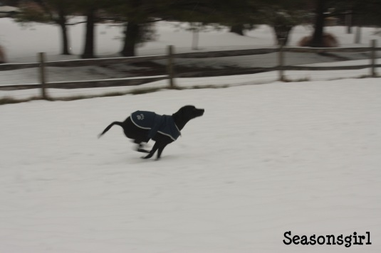 Baxter Run