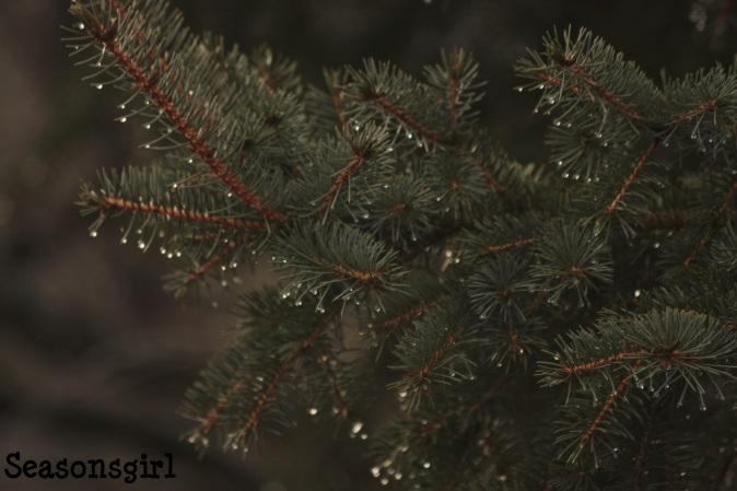 tree dew