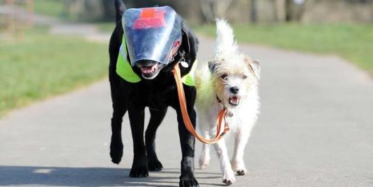 Blind dog n friend