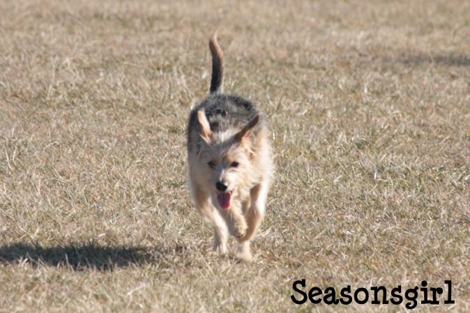 Chase run 1