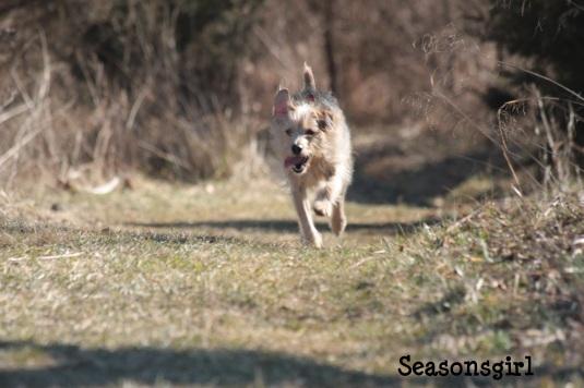 Chase run 2