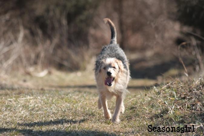 Chase run 3