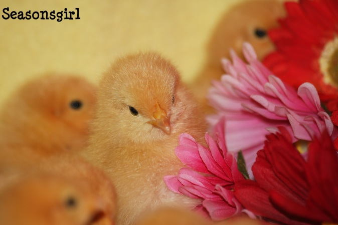 Chick n flower