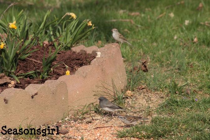 Birdies 2