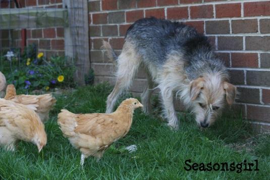 chick checks chase