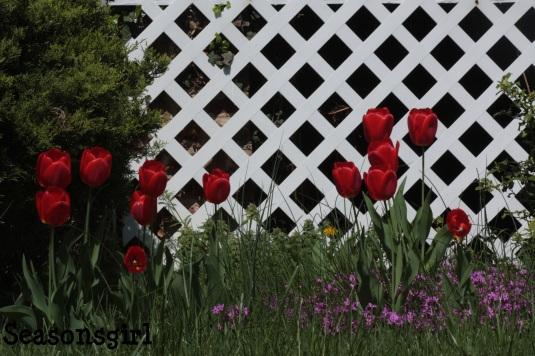 Tulips fence