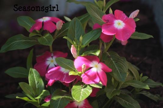 sml flower
