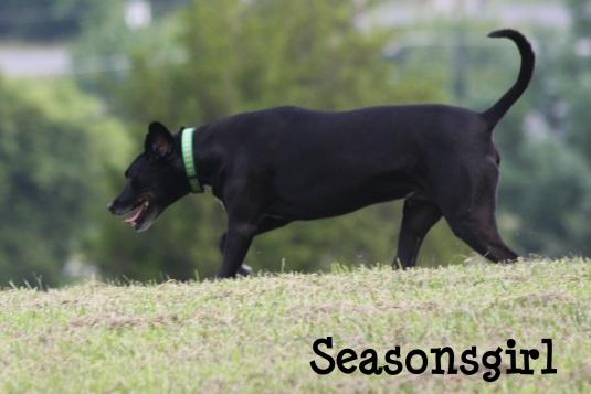 Baxter running