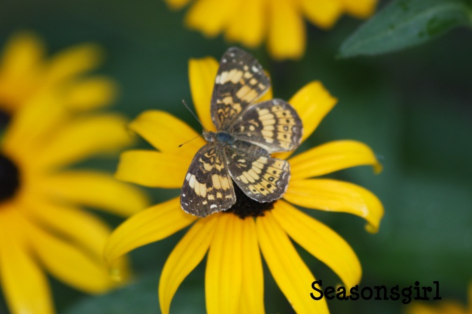 Butterfly yellow 2