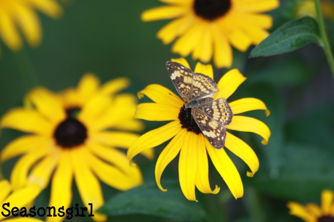 Butterfly yellow 6