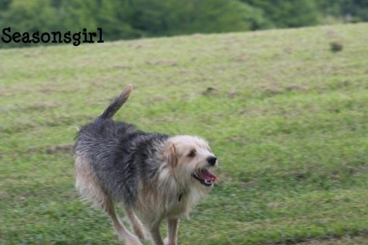 Chase run 4