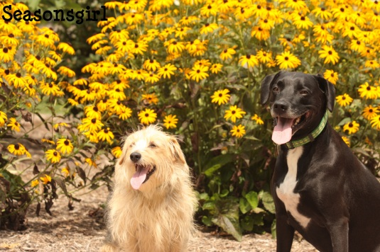 Bax n chase yellow flower
