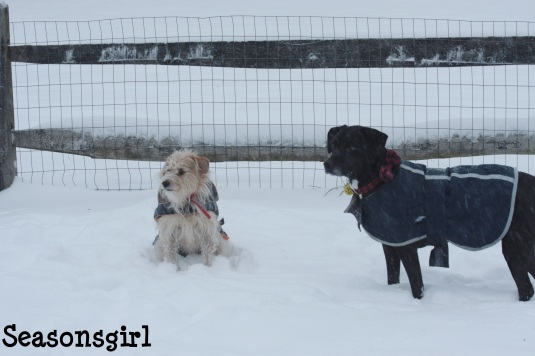 Bax and Chase snow