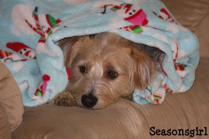 Chase snuggled