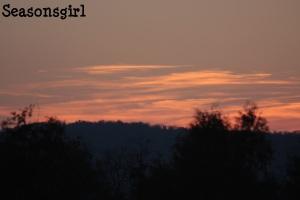 Tree farm sunset 2
