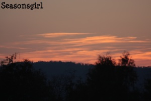 Tree farm sunset 2