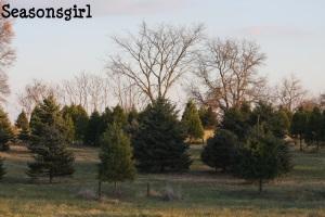 The start of the tree farm...