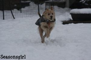 Chase run
