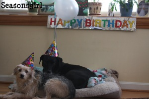 Lornes Birthday Dogs