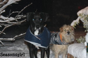 Snow bax n chase