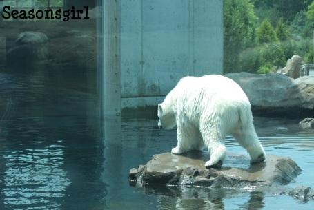 Poler Bear 1