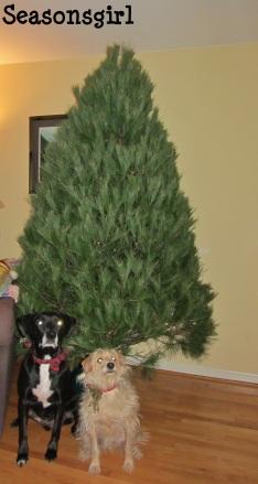 Tree chase bax