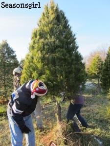 Tree cut 2