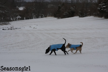 Dogs run 2