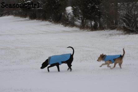 Dogs run
