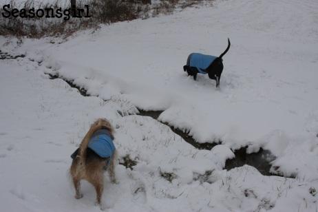 Dogs stream