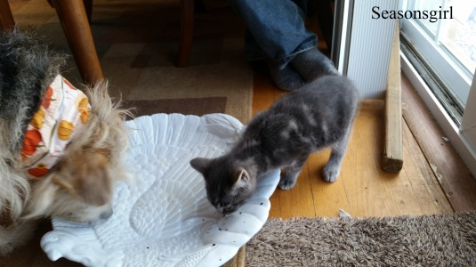 kitten and chase