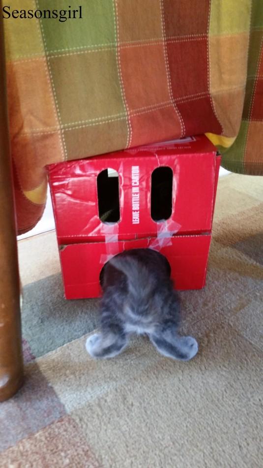 kitten box