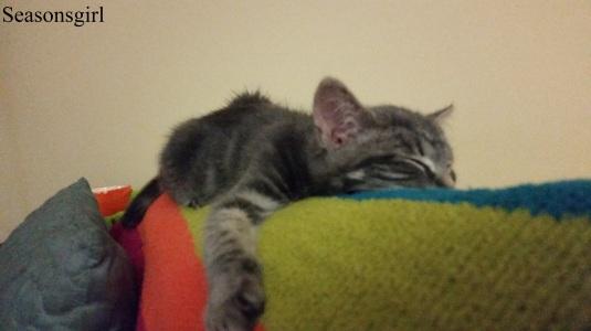 kitten couch