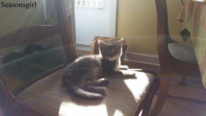 kitten sunning