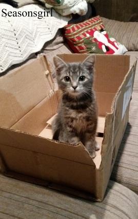 kittenbox