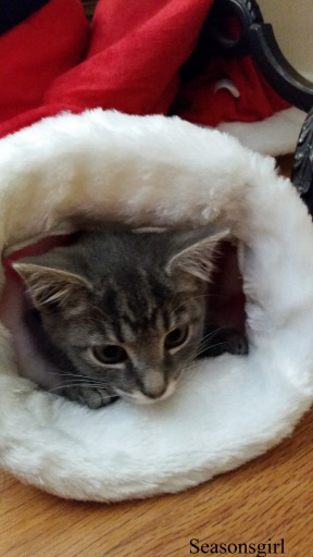 kittenclause