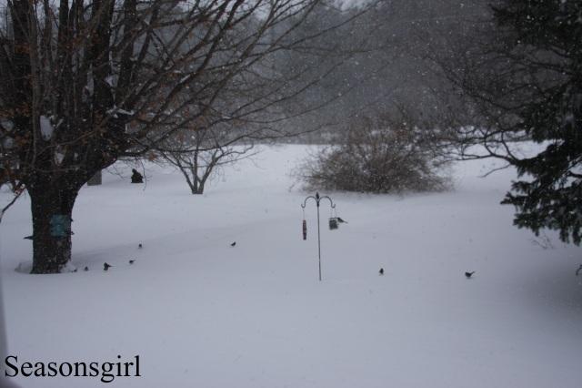Birds n snow
