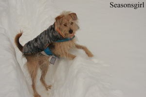 Chase snow2