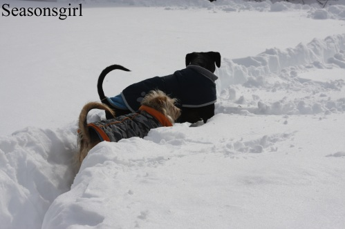 Dogs Snow3