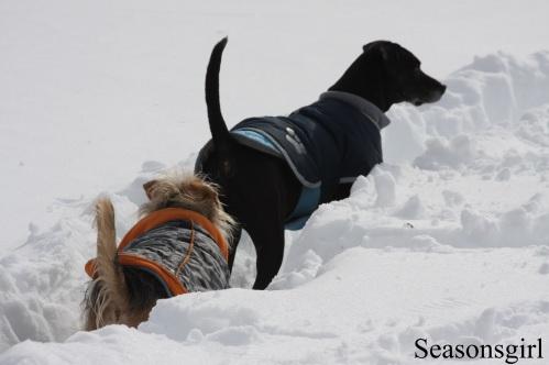 Dogs snow4