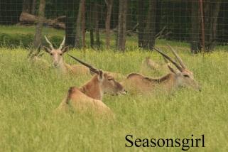 long antlers