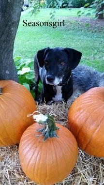 baxter-pumpkins