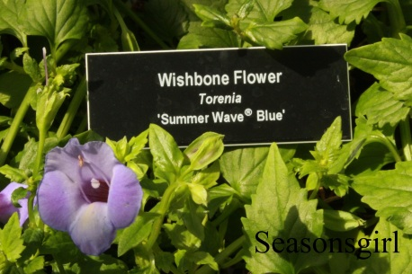 flower-wishbone2