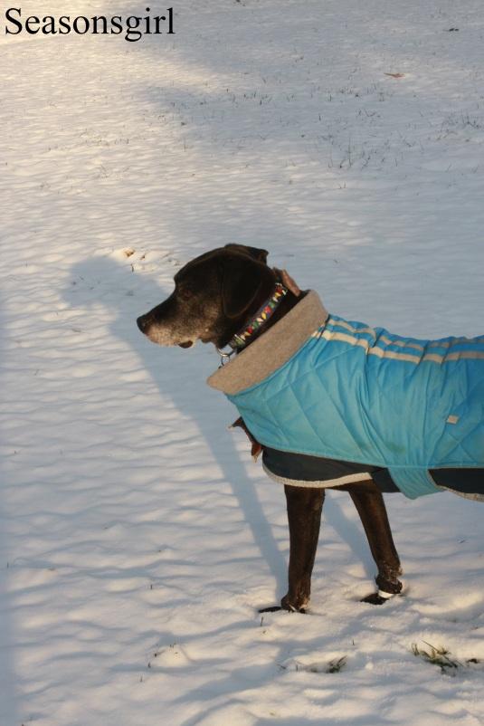 baxter-snow