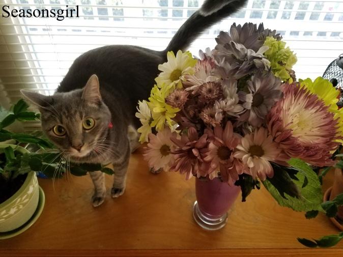 cat-n-flowers