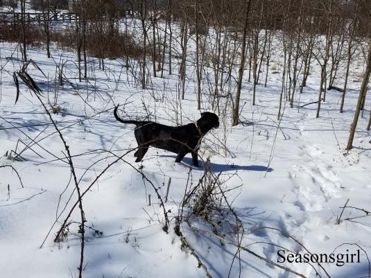 Baxter snow