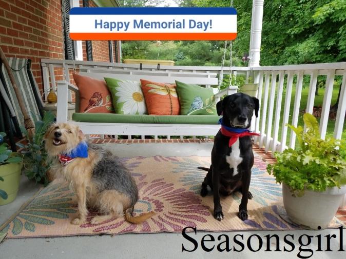 2 pups wish