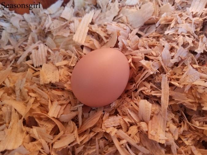 adolescent egg