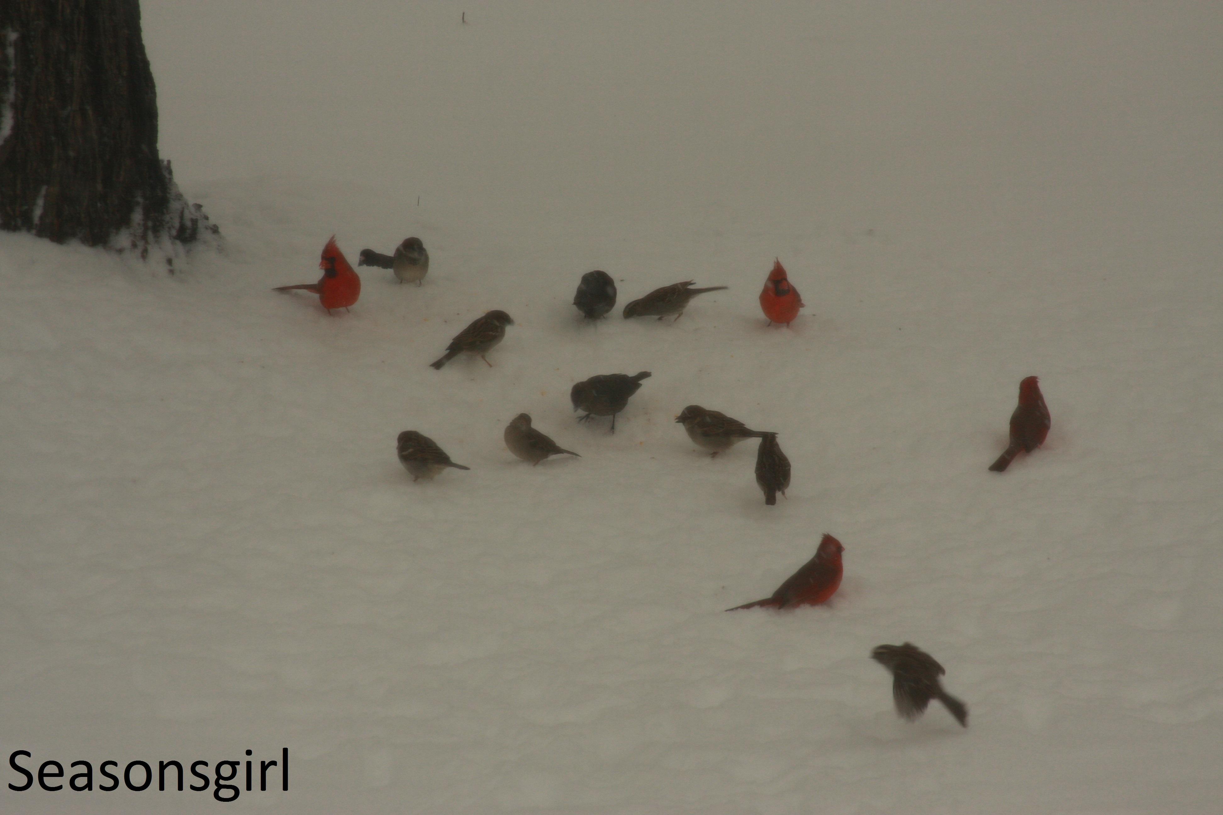 Birds snow