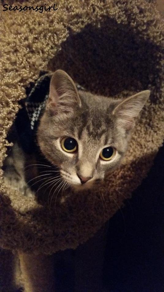 cat grayson